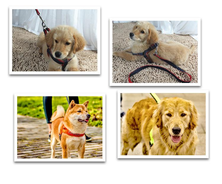 warmte-overdracht hondenriem en halsband