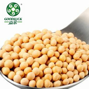 New Crop High Quality GMO/ non-GMO Soybeans for Food and oil Exprassing in Bulk
