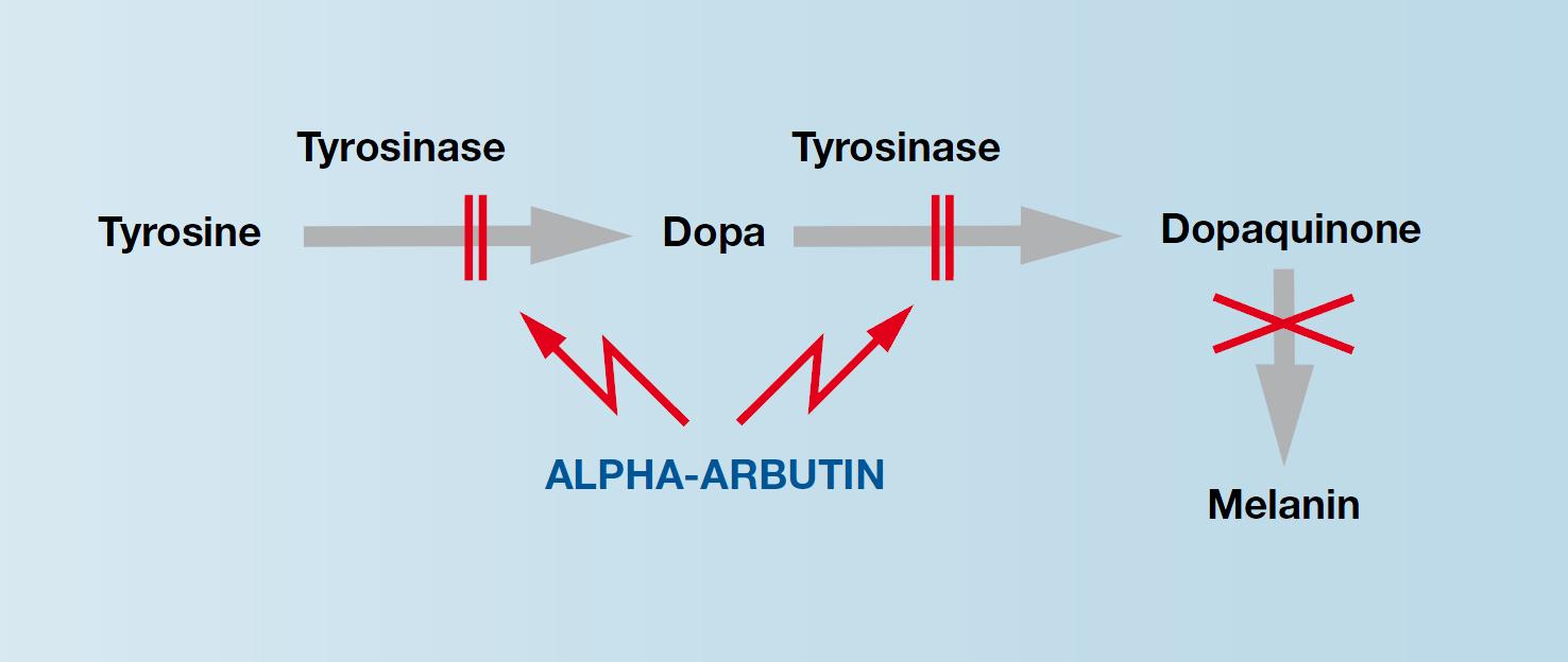 arbutin,melanin에 대한 이미지 검색결과