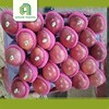Professional fresh taste fresh qinguan apple fruit with low price