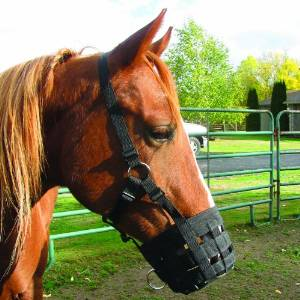 palimino Horse Equine Head in Halter Animal T-Shirts 3dRose Susans Zoo Crew Animal