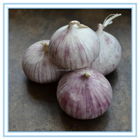Organic one bulb garlic, fresh one clove garlic, Pearl Garlic wholesale