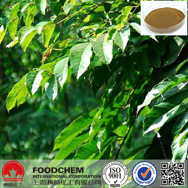 Free Samples Olive Leaf Extract Powder Oleuropein