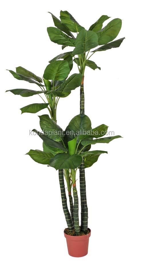 office plants for sale. Modren Plants Office Plants For Sale Wholesale Artificial Sale H In Office Plants For Sale F