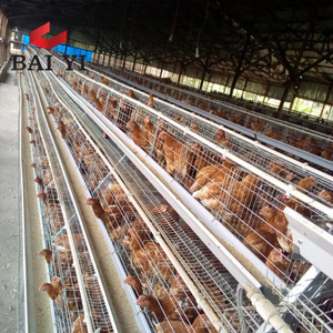 Egg layer chicken cages for 5000 birds poultry farm construction