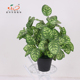 table bonsai plant plastic artificial peacock bonsai tree for wholesale