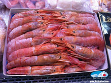 Argentina Shrimps