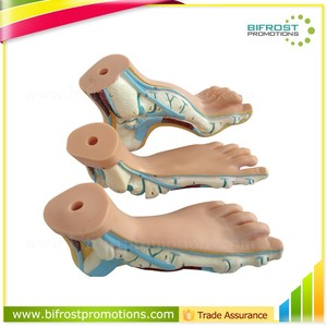 Biological Teaching Aids Education Silicone Foot Model