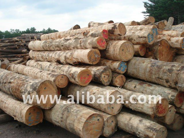 Eastern White Pine Logs