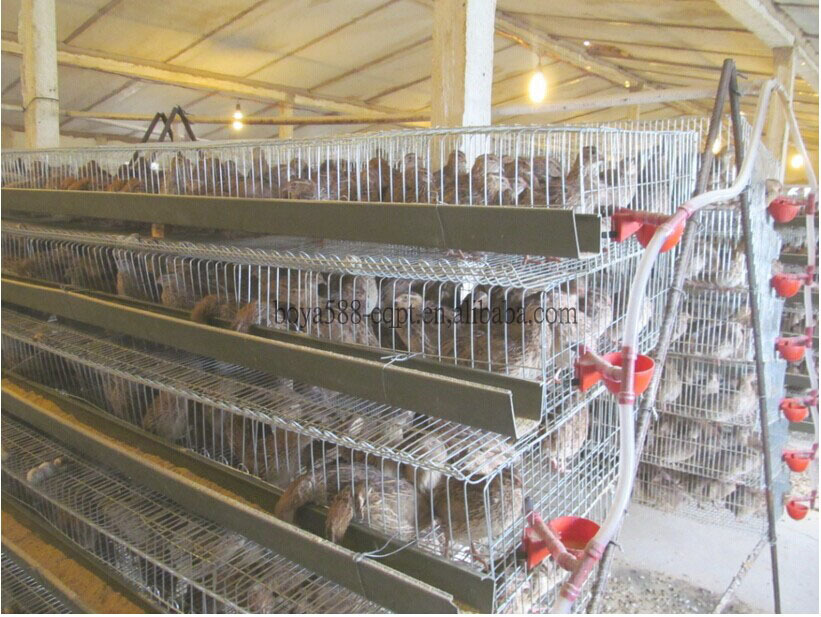 The Best Selling Products! Quail Cages And Quail Farm ...