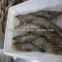fresh frozen pud shrimp importer