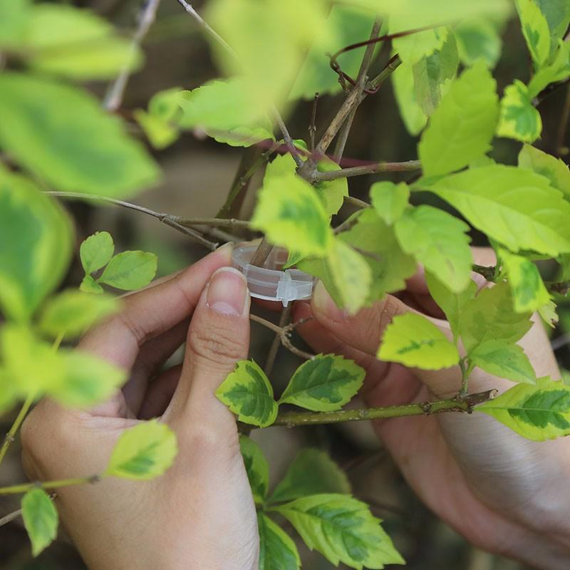Vegetarian Garden 100Pcs Mini Transparent Flower Plants Grafting Clips For 2.0-4.5mm Seedlings Tied Branch Tendril Clip/Clamp