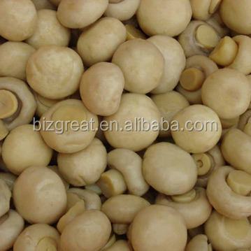 Hot Sale Canned mushroom/champignons from China