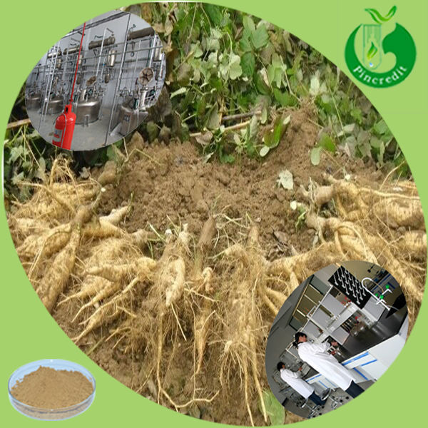 Chinese herb Kudzu Root/Kudzu Root powder