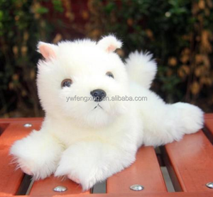 Dog West Highland Terrier Dog West Highland Terrier Suppliers And