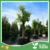 hot sale high quality plastic air tree root pot for nursery