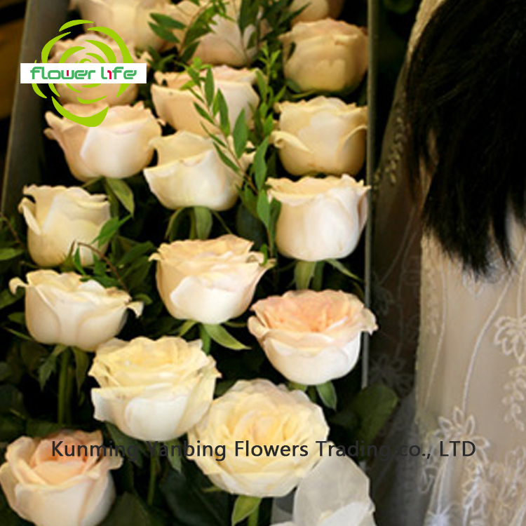 Colorful Eagle Link Flowers With 5-8cm Big Bud High Quality Rose White Rabbit Flower For Friend Gift