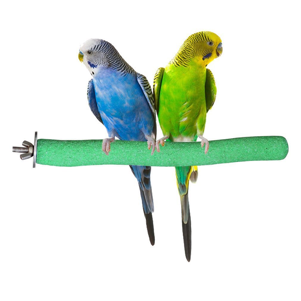 my pet my parrot Pet bird and parrot behavior information there's no such thing as a quiet bird some are quieter than others, usually because of size — the bigger the bird, the louder the volume.
