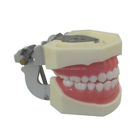 Top sale guaranteed quality dental laboratory products student practice teeth model in dentistry