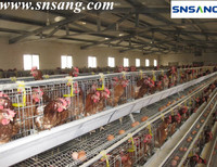 hot galvanized or plastic coating Material and Bird Use design layer chicken cages