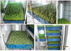 750W 50KG/Day high efficiency seeding machine +86 18939580276
