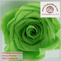 Finest Preserved Cutting Flowers Price Offered Four Seasons With Low Price And Fast Shipping