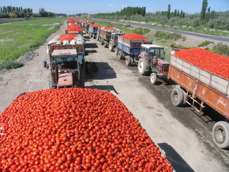 2019 new crop tomato paste in cans