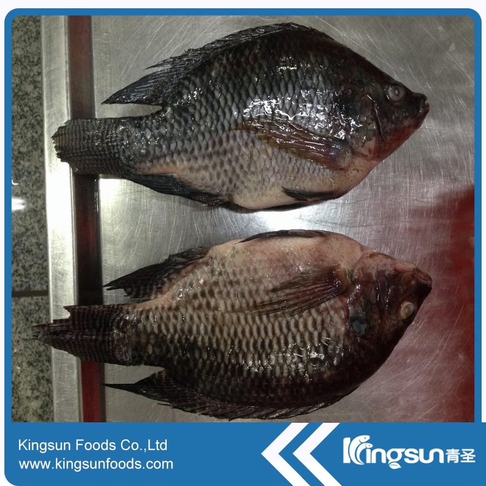 New Season Sea Frozen Whole Round Frozen Tilapia Fish