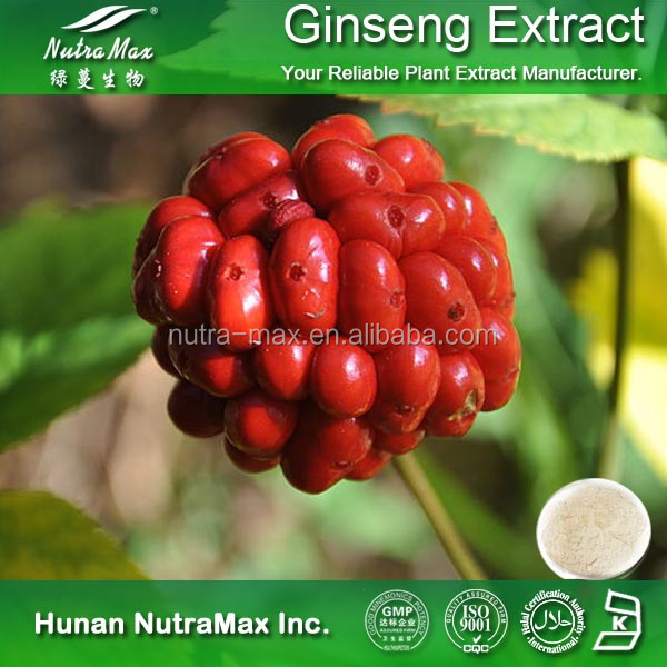 Health Supplement Panax Ginseng Berry Extract Powder Ginsenosides 5%~80% by HPLC & UV-VIS