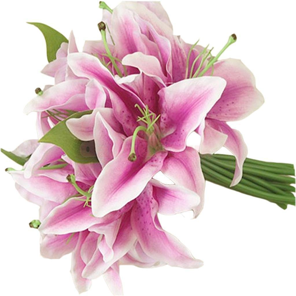 Cheap Lily Flower Colors Find Lily Flower Colors Deals On Line At