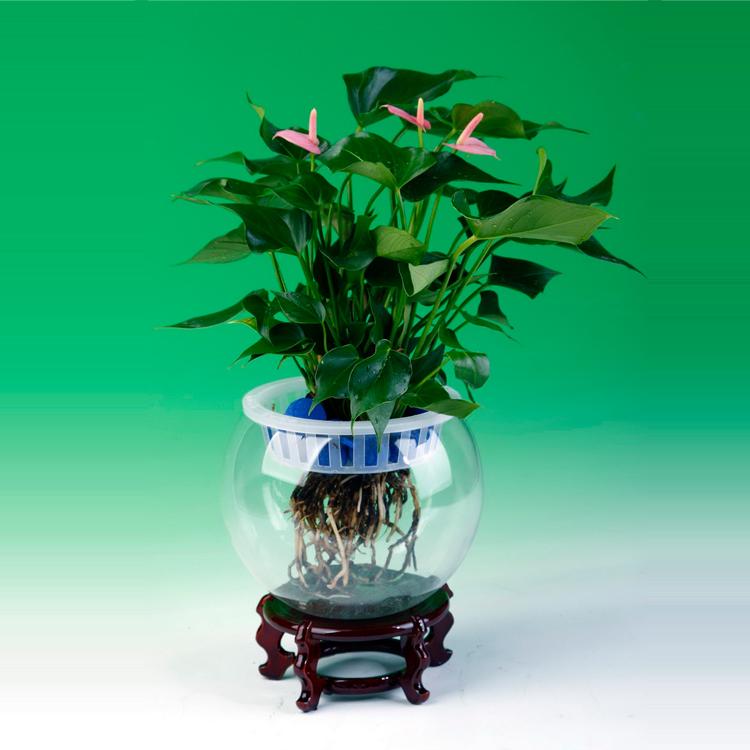 Grosir Plastik Tanaman Hidroponik Pot Bunga Pemegang Buy Hidroponik Pot Plastik Hidroponik Pot Grosir Plastik Hidroponik Tanaman Bunga Pot Product