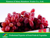 Nasik grapes red aloeve from Yunnan & Xinjiang area fresh fruit Red grape from China import export companies pune