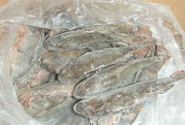 Raw material live tilapia fish produce frozen fish