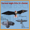 Various kinds of eagle kite for sale