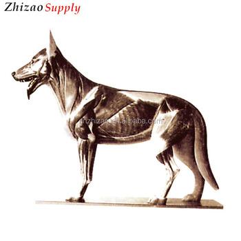 Dog Canine Anatomy Model,Dog Anatomical Model,Dog Dissection Model ...