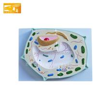 Aktion Pflanzenzellen Modell Einkauf Pflanzenzellen Modell