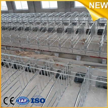 Hot sale automatic piglet feeder