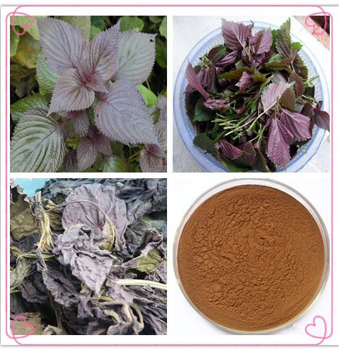 Natural pigment Perilla Color,perilla leaf extract 10:1