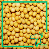 Chinese Bean Organic Dry Soybeans Soyabeans 2016