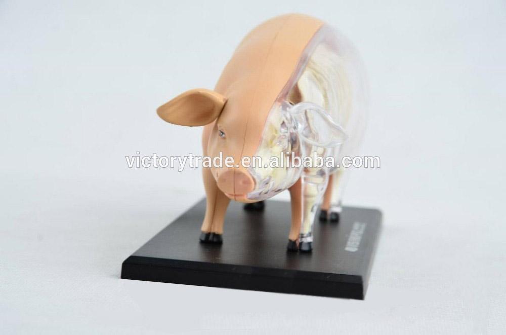 V-am057 4d Maestro Cerdo Animal Especímenes Modelo Anatómico Médico ...