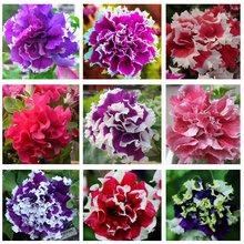 petunia petals flower, color flower seeds, 200seeds/bag