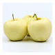 New crop golden crisp apple from Shanxi
