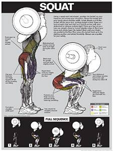 Squat Workout Laminated Poster