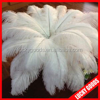2015 Yiwu export wedding or party favor white ostrich feather