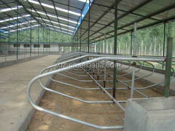 advanced automated constant temperature cow cattle farm