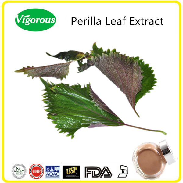 GMP manufacturer Free sample 10:1 pure natural perilla leaf extract