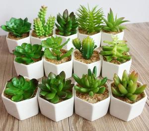 Spring Styles Mini Size Succulent Plants Artificial Mini Succulent Plants