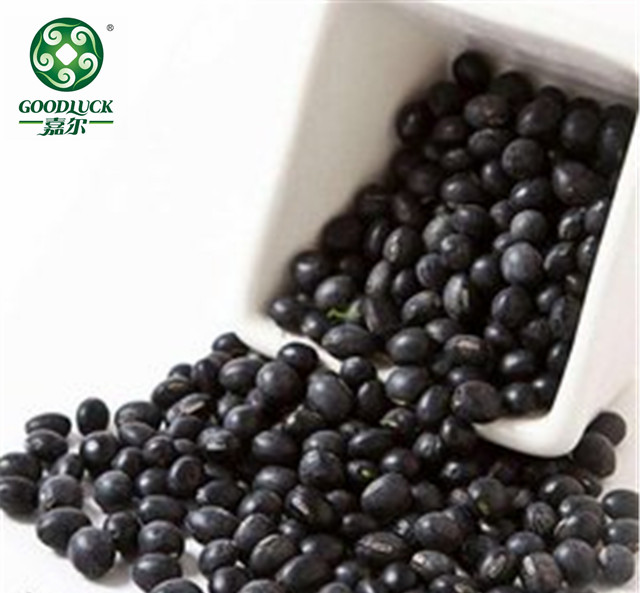 Wholesale Cheap Small Black Kidney Beans in Bulk , A leading supplier, Reasonable Price