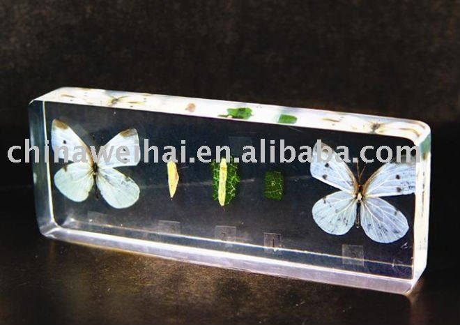 clear real insects resin block