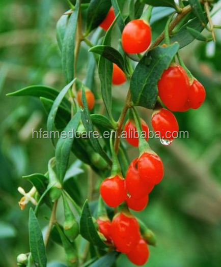 Raw Goji berry, nature wolfberry, lycium barbarum ,medlar,Ning Xia hot sales